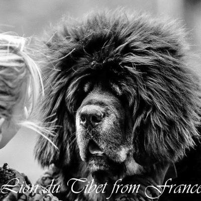 lao des lion du tibet