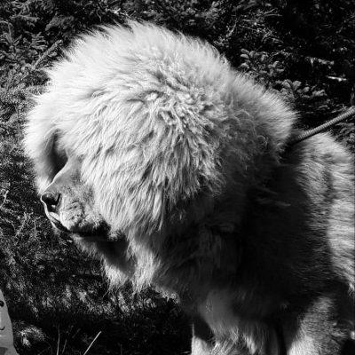OURAL DES LIONS DU TIBET